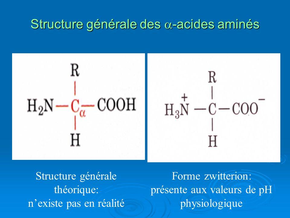 Structure générale des -acides aminés