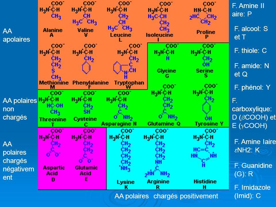 F. Amine II aire: PF. alcool: S et T. AA apolaires. F. thiole: C. F. amide: N et Q. F. phénol: Y. AA polaires non chargés.