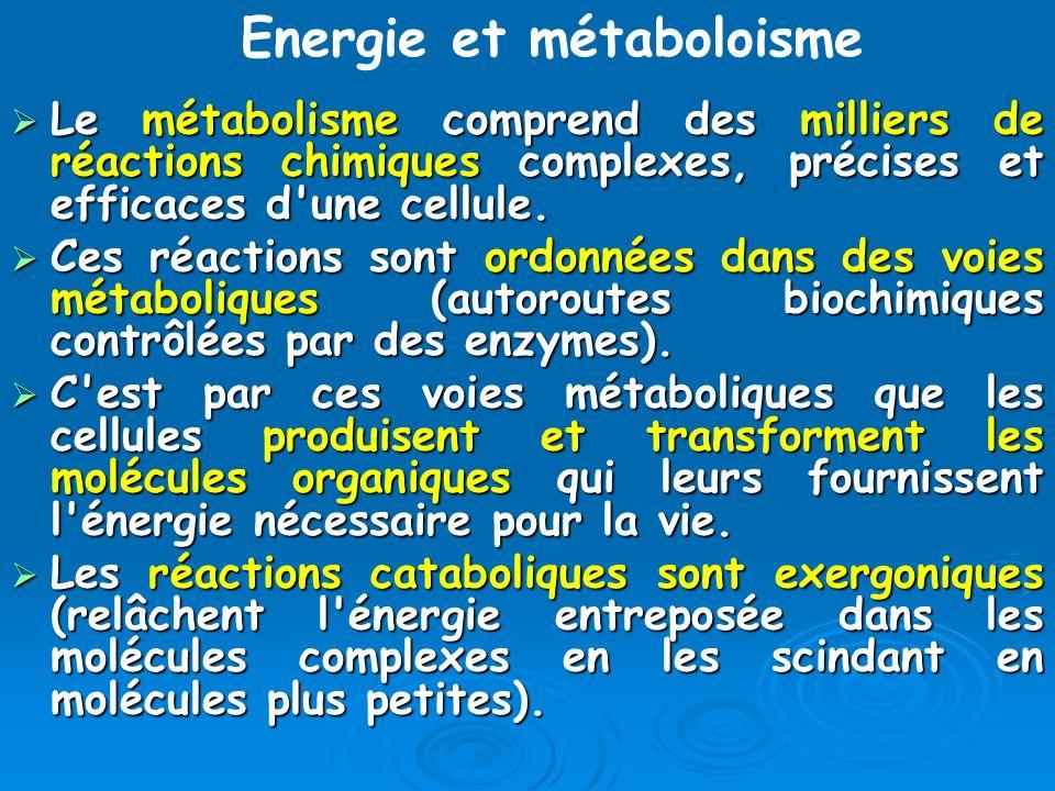 Energie et métaboloisme