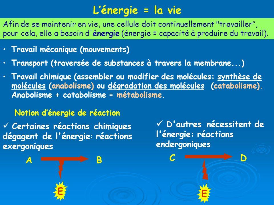 L'énergie = la vie C D E A B E