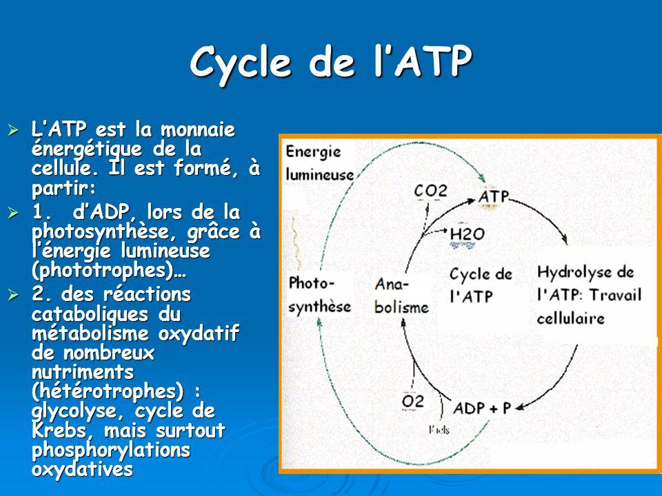 Cycle de l'ATP L'ATP est la monnaie énergétique de la cellule. Il est formé, à partir: