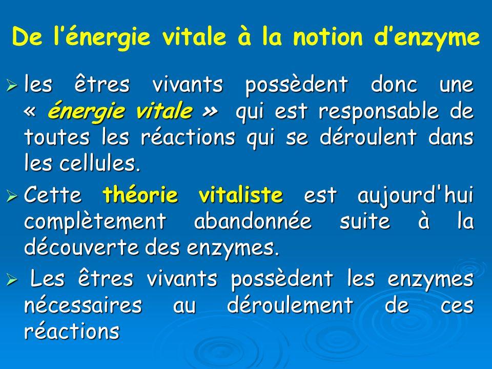 De l'énergie vitale à la notion d'enzyme