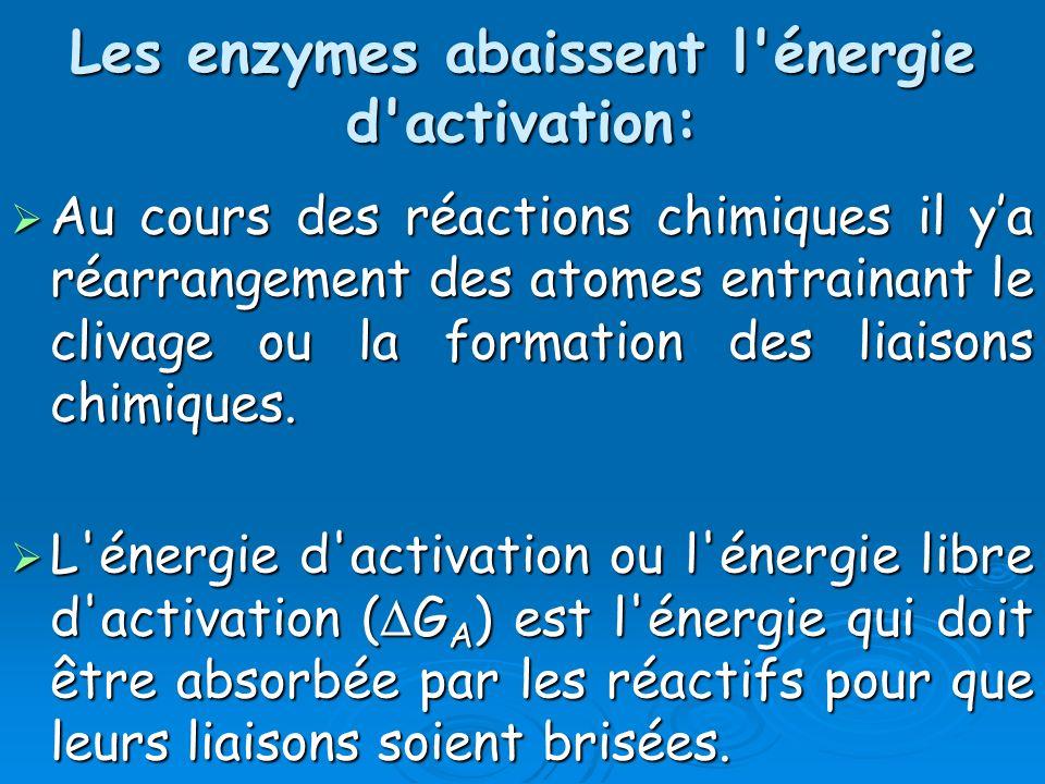 Les enzymes abaissent l énergie d activation: