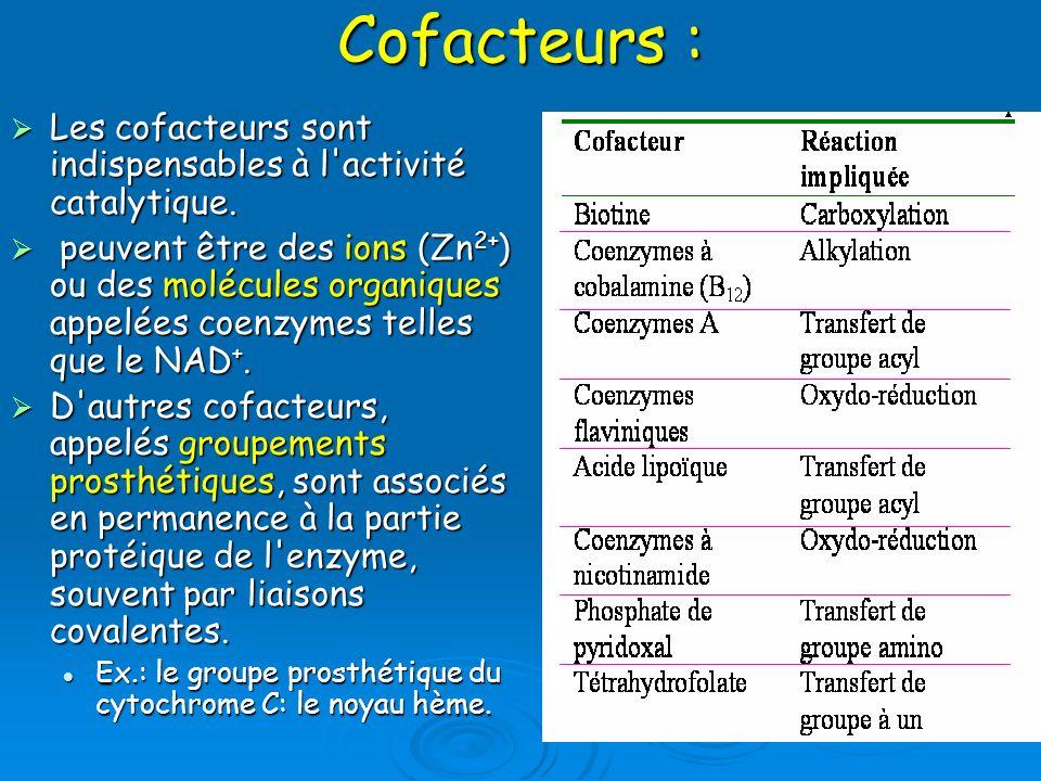 Cofacteurs :Les cofacteurs sont indispensables à l activité catalytique.
