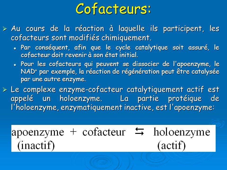 Cofacteurs: Au cours de la réaction à laquelle ils participent, les cofacteurs sont modifiés chimiquement.