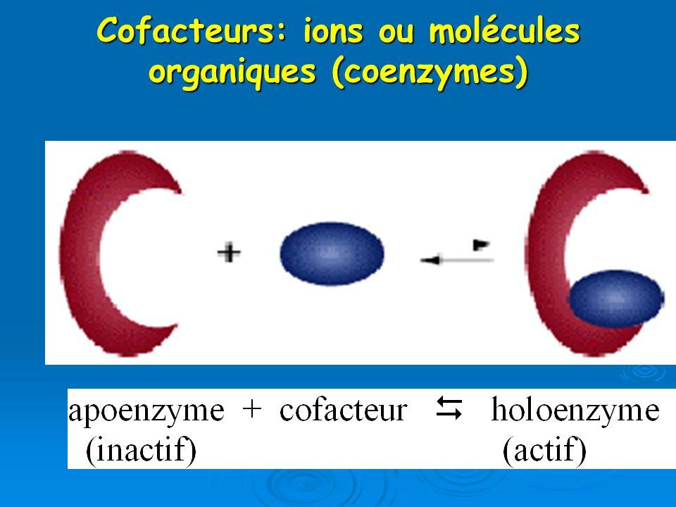 Cofacteurs: ions ou molécules organiques (coenzymes)