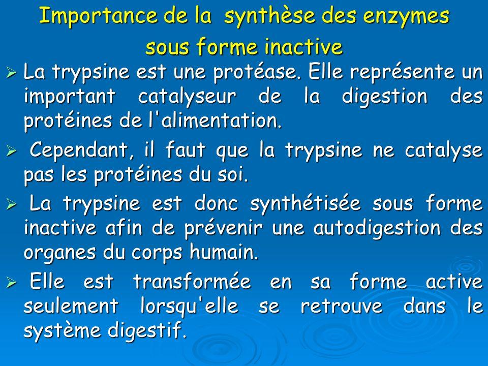 Importance de la synthèse des enzymes sous forme inactive