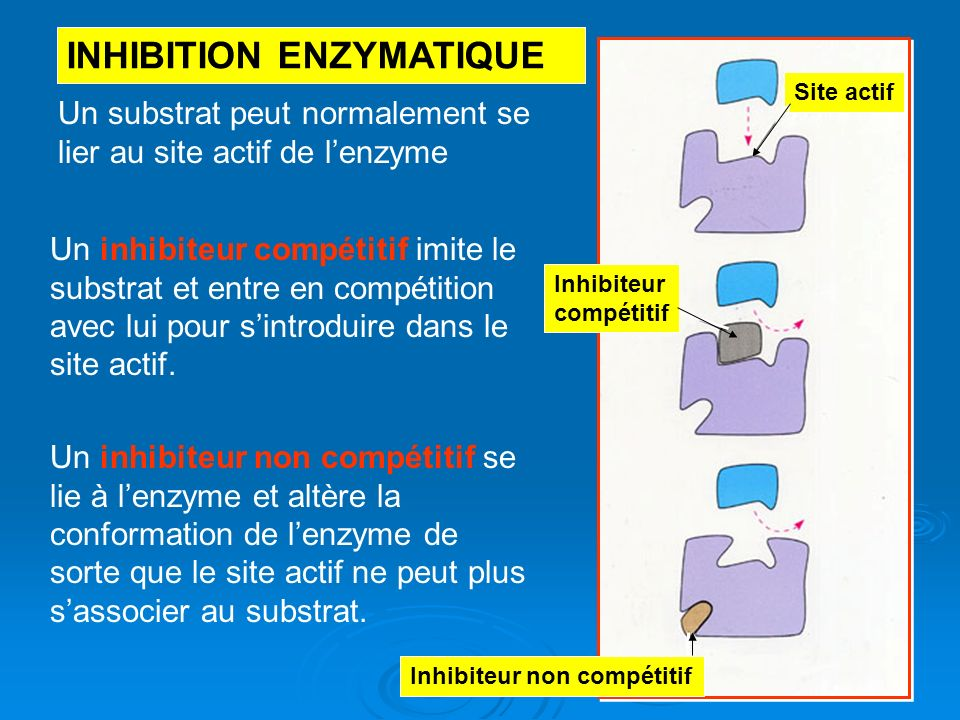 INHIBITION ENZYMATIQUE