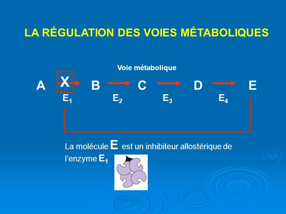 X A B C D E LA RÉGULATION DES VOIES MÉTABOLIQUES E1 E2 E3 E4