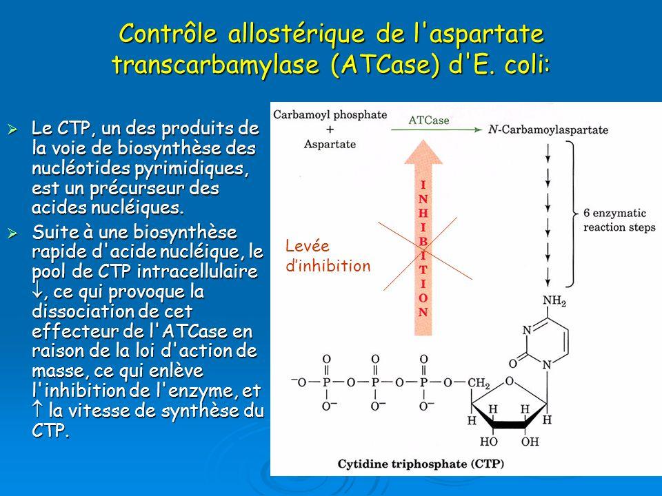 Contrôle allostérique de l aspartate transcarbamylase (ATCase) d E