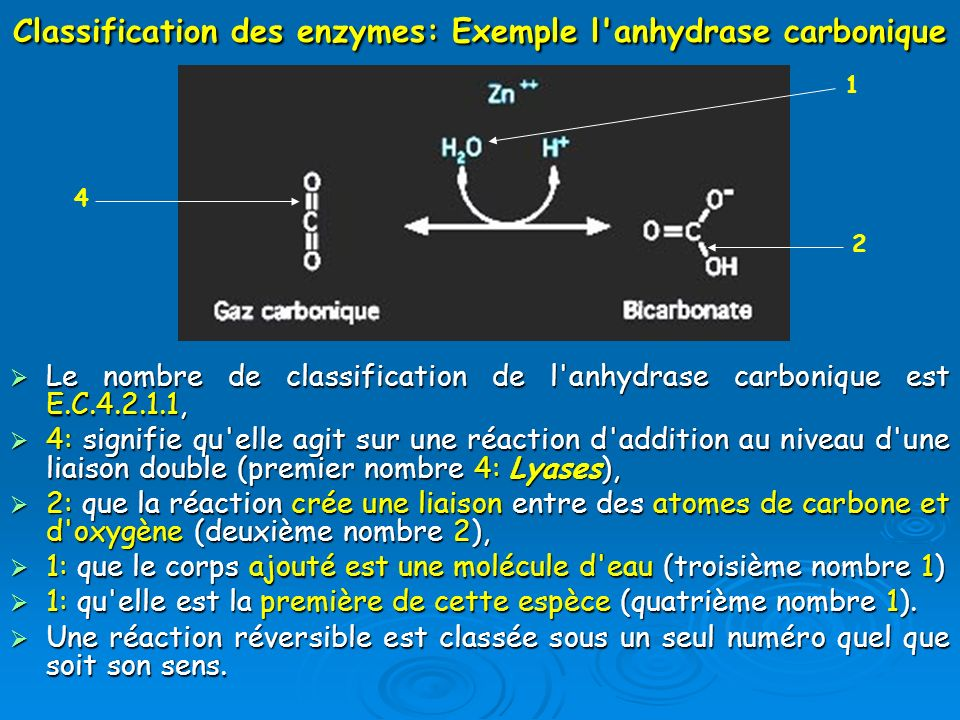 Classification des enzymes: Exemple l anhydrase carbonique