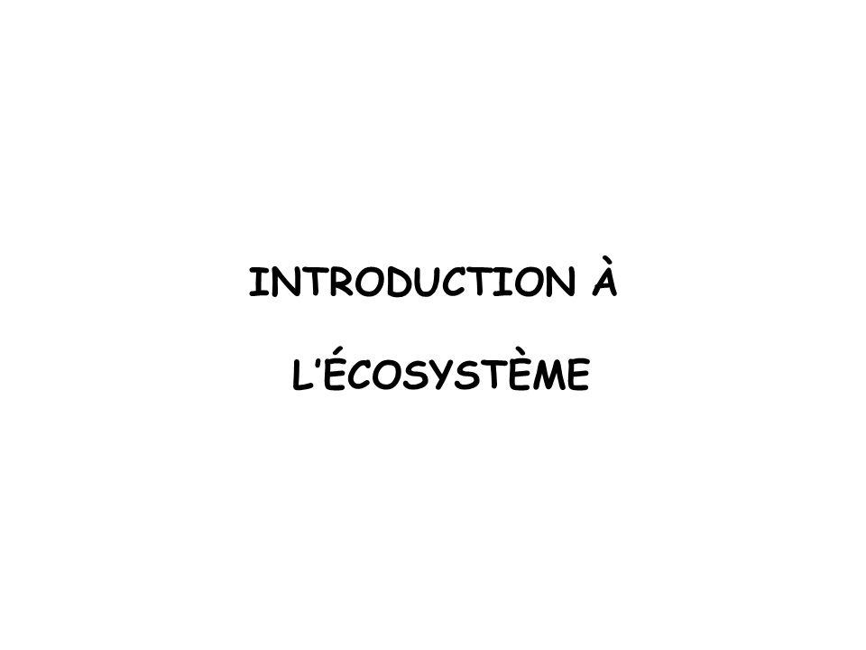 INTRODUCTION À L'ÉCOSYSTÈME