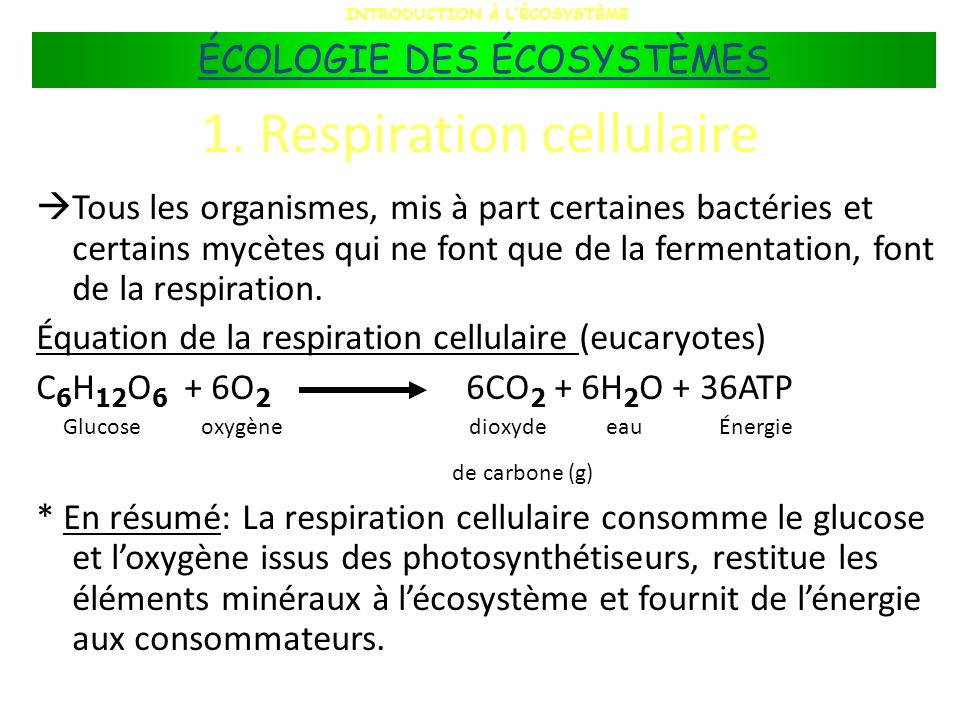 1. Respiration cellulaire