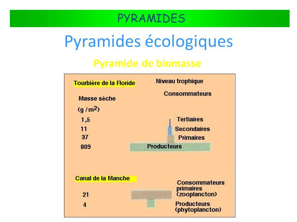 Pyramides écologiques