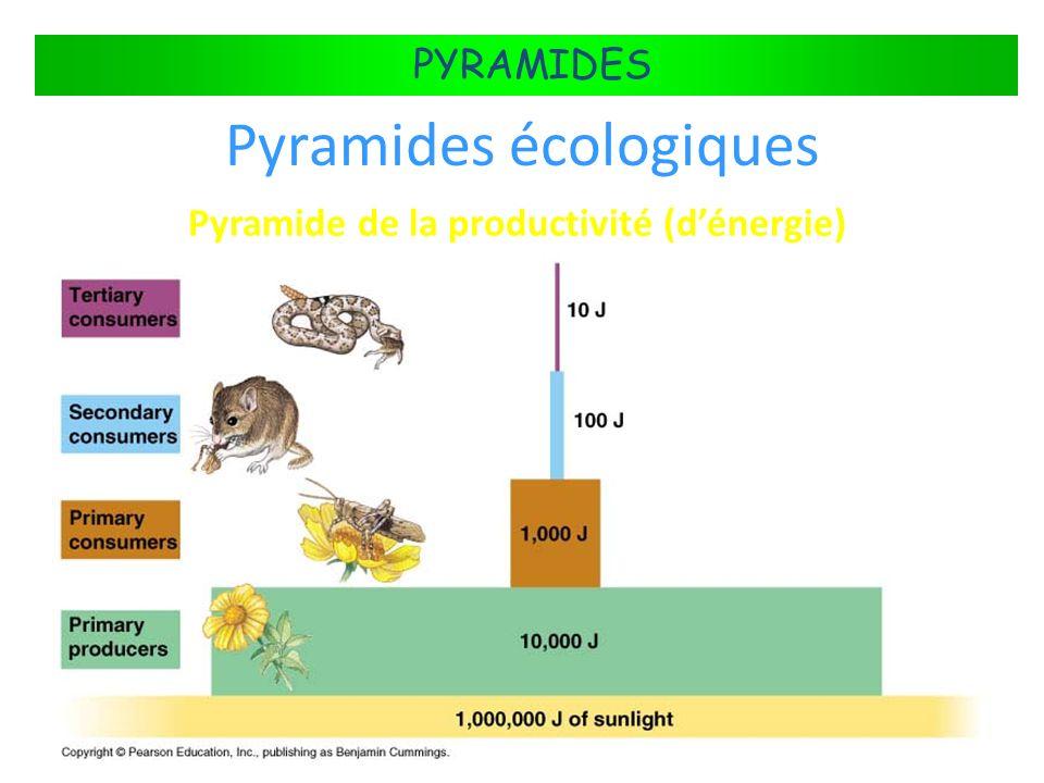 Pyramide de la productivité (d'énergie)