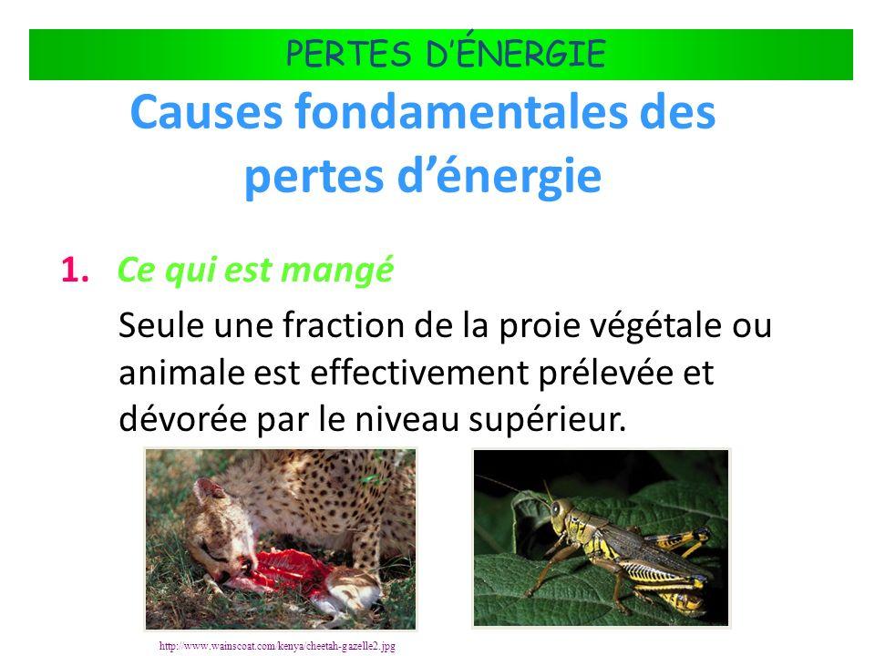 Causes fondamentales des pertes d'énergie
