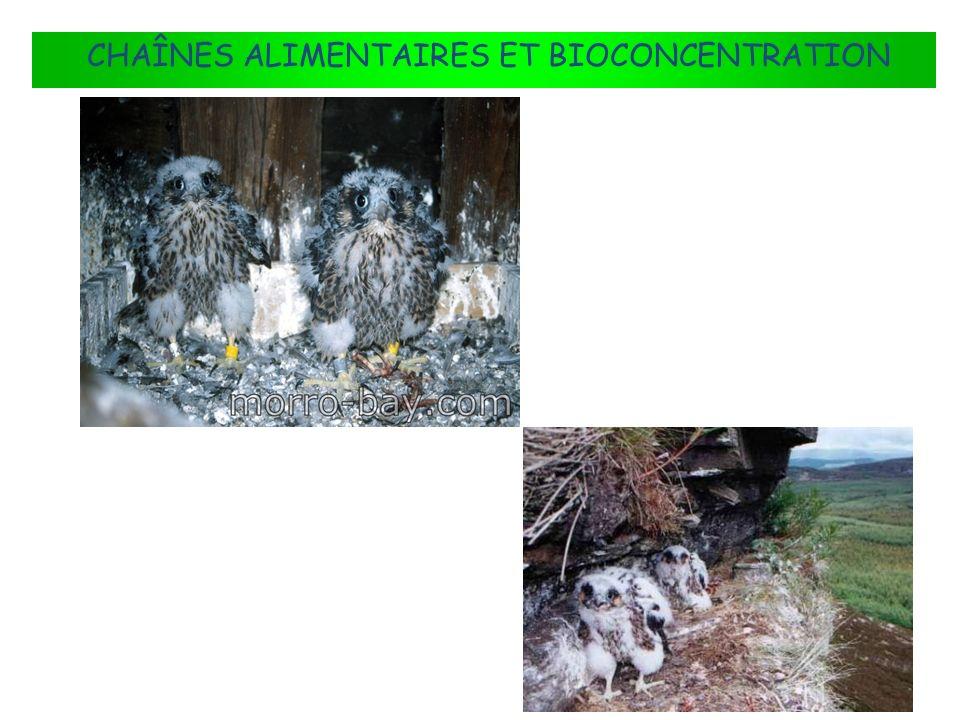 CHAÎNES ALIMENTAIRES ET BIOCONCENTRATION