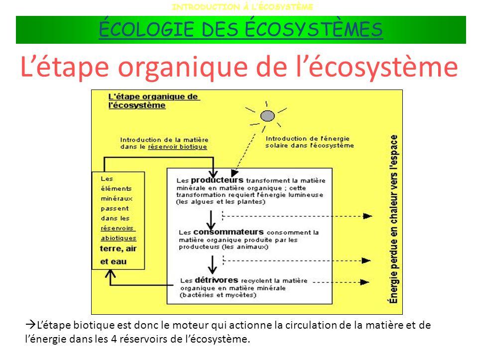 L'étape organique de l'écosystème