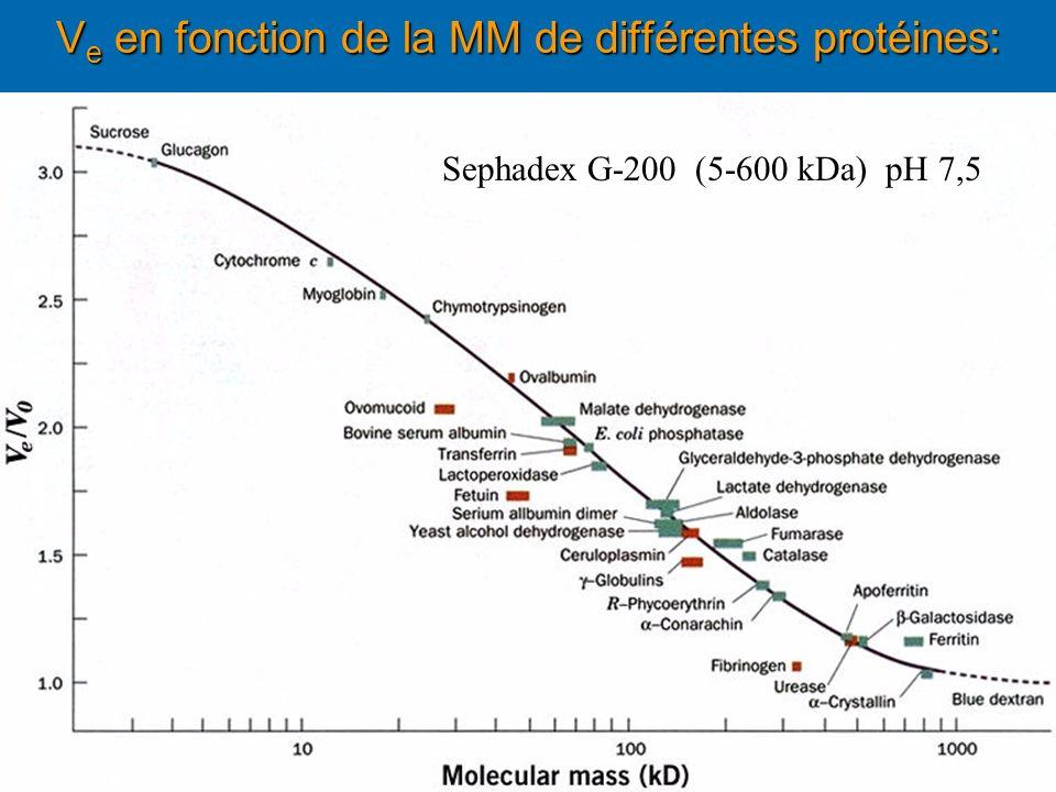 Ve en fonction de la MM de différentes protéines: