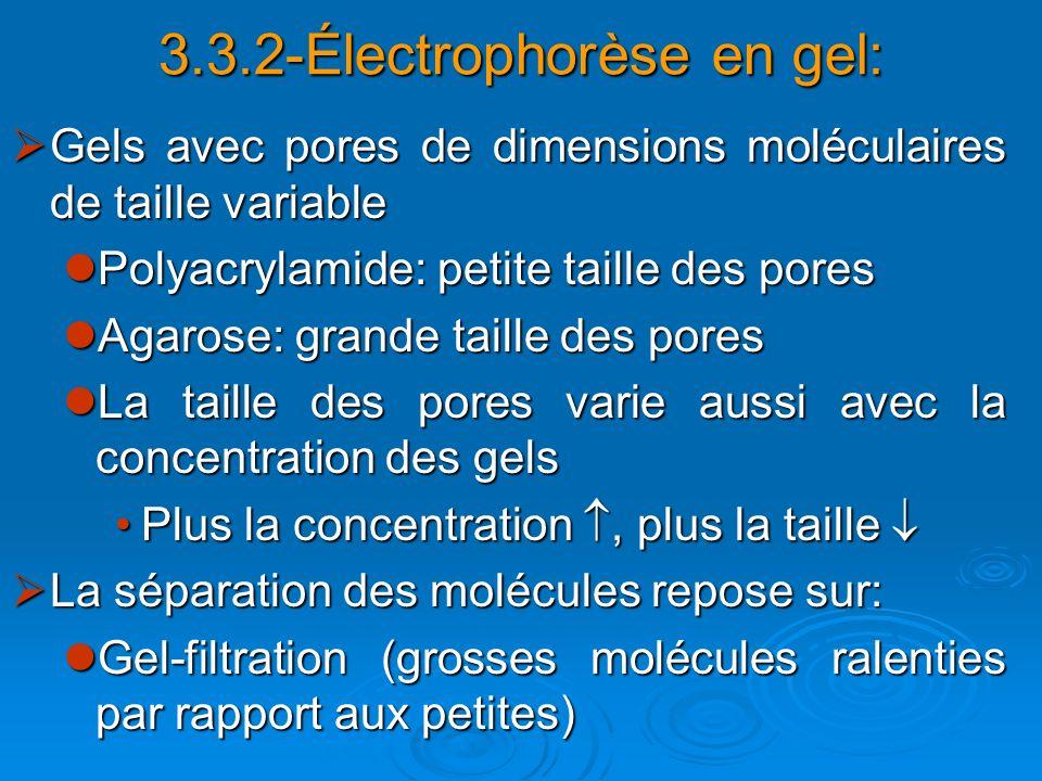 3.3.2-Électrophorèse en gel: