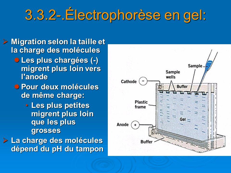 3.3.2-.Électrophorèse en gel: