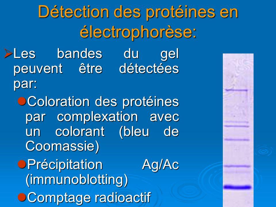 Détection des protéines en électrophorèse: