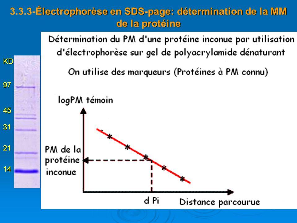 3.3.3-Électrophorèse en SDS-page: détermination de la MM de la protéine