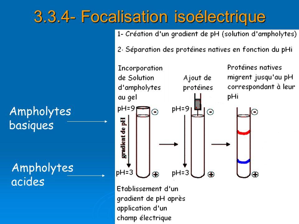 3.3.4- Focalisation isoélectrique