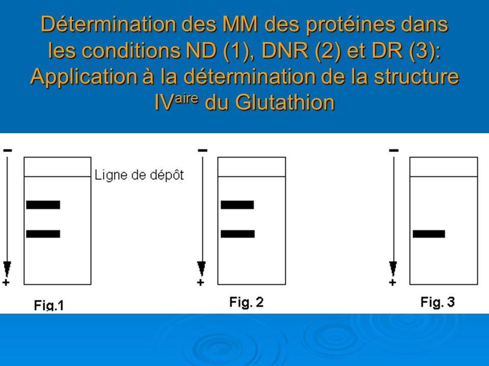 Détermination des MM des protéines dans les conditions ND (1), DNR (2) et DR (3): Application à la détermination de la structure IVaire du Glutathion