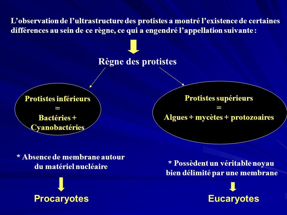 Bactéries + Cyanobactéries Algues + mycètes + protozoaires