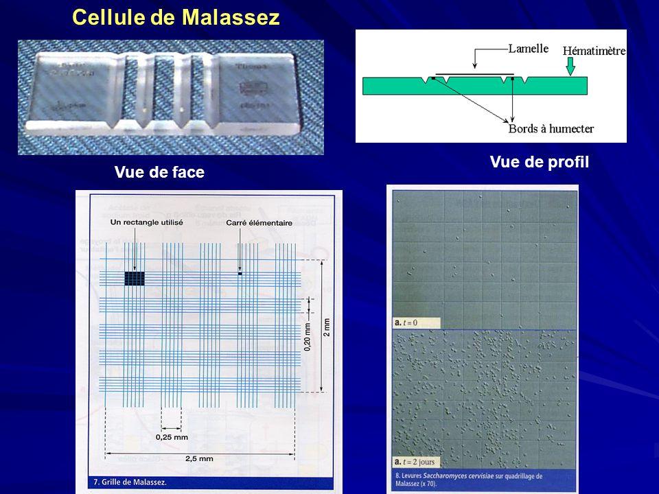 Cellule de Malassez Vue de profil Vue de face