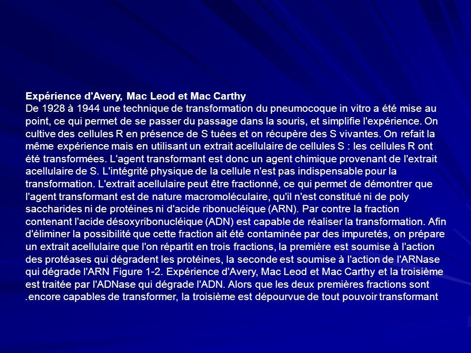 Expérience d Avery, Mac Leod et Mac Carthy