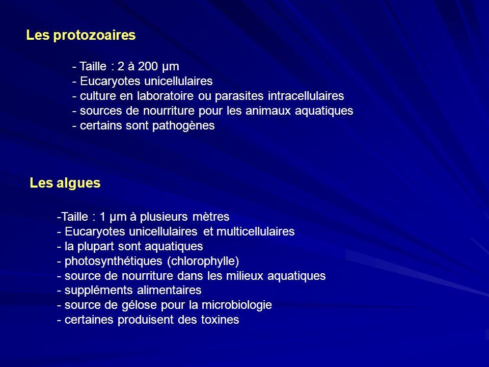 Les protozoaires Les algues Taille : 2 à 200 µm