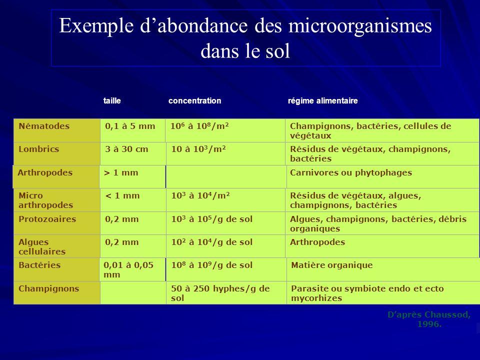 Exemple d'abondance des microorganismes dans le sol
