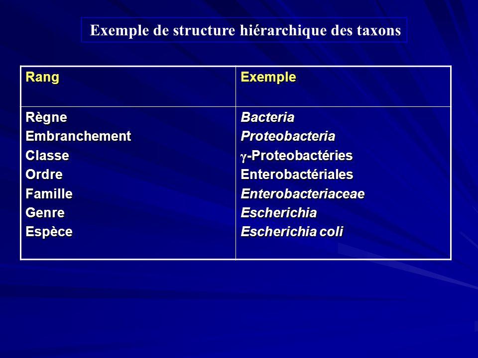 Exemple de structure hiérarchique des taxons