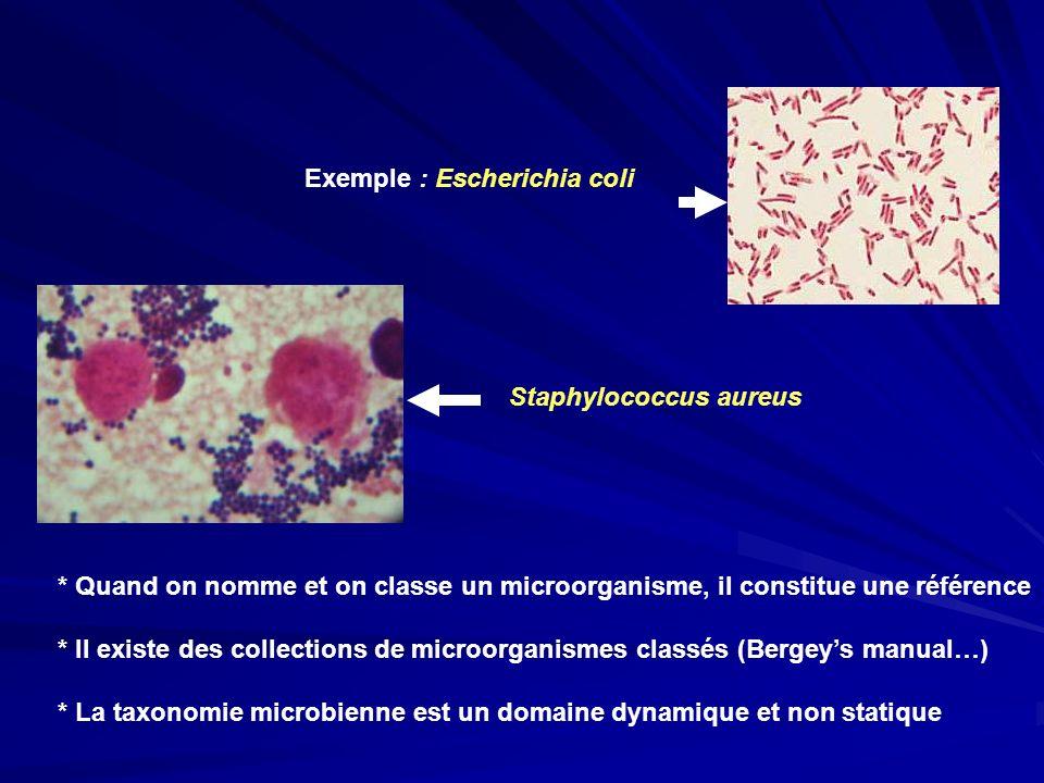 Exemple : Escherichia coli
