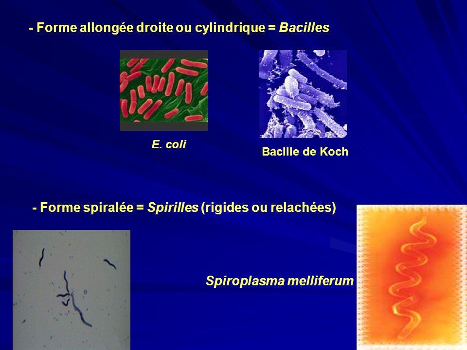 Spiroplasma melliferum