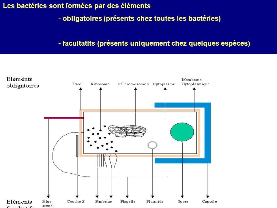 Les bactéries sont formées par des éléments