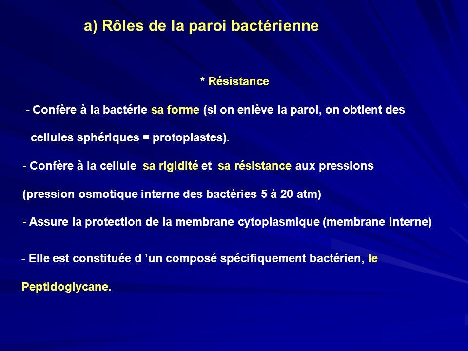 a) Rôles de la paroi bactérienne