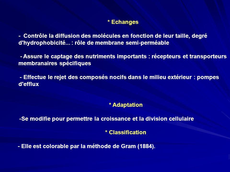 * Echanges - Contrôle la diffusion des molécules en fonction de leur taille, degré d hydrophobicité... : rôle de membrane semi-perméable.