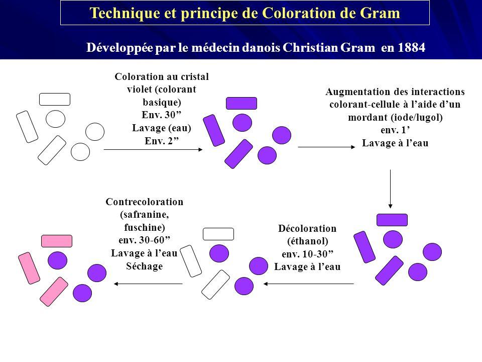 Technique et principe de Coloration de Gram
