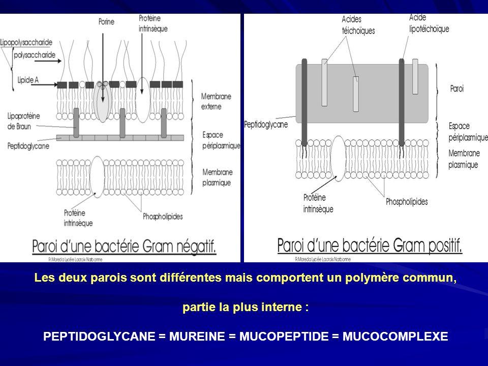 Les deux parois sont différentes mais comportent un polymère commun,