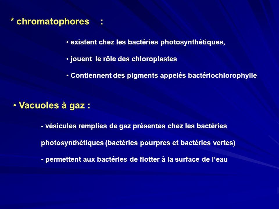 * chromatophores : Vacuoles à gaz :