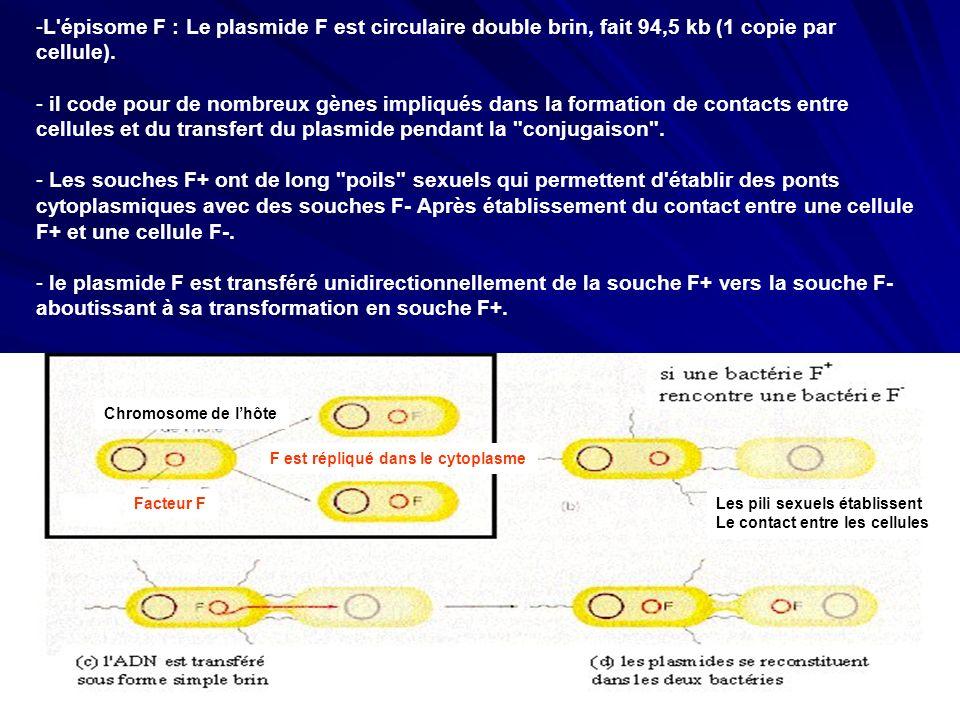 L épisome F : Le plasmide F est circulaire double brin, fait 94,5 kb (1 copie par cellule).