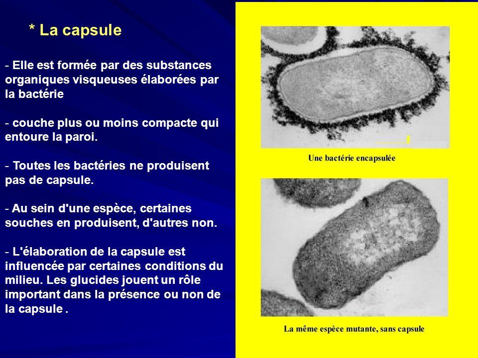 * La capsule Elle est formée par des substances organiques visqueuses élaborées par la bactérie. couche plus ou moins compacte qui entoure la paroi.