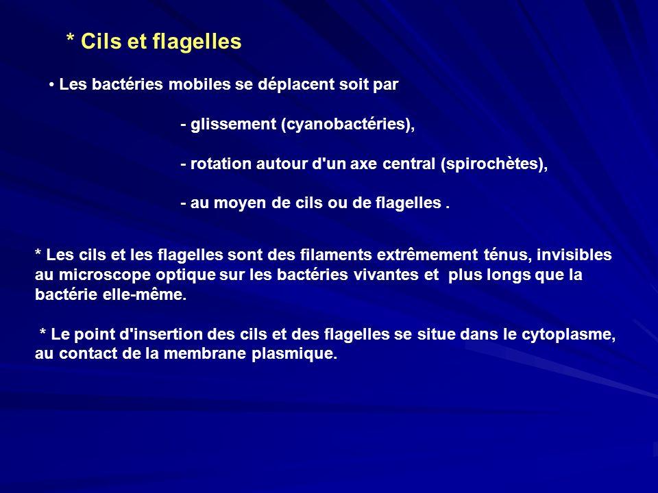 * Cils et flagelles Les bactéries mobiles se déplacent soit par