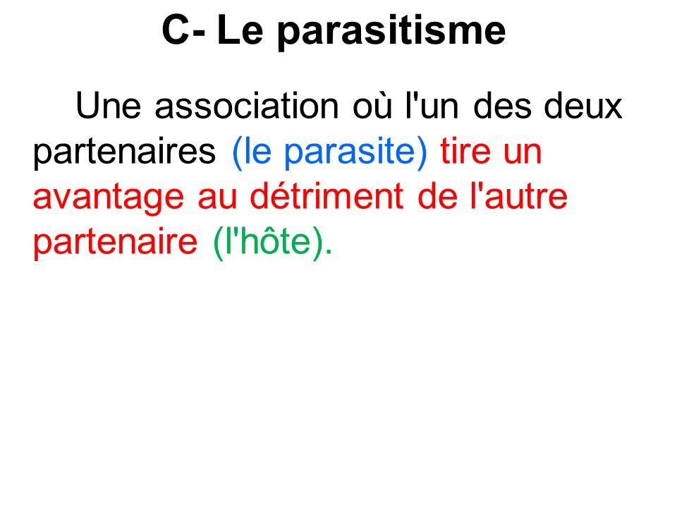 C- Le parasitisme Une association où l un des deux partenaires (le parasite) tire un avantage au détriment de l autre partenaire (l hôte).
