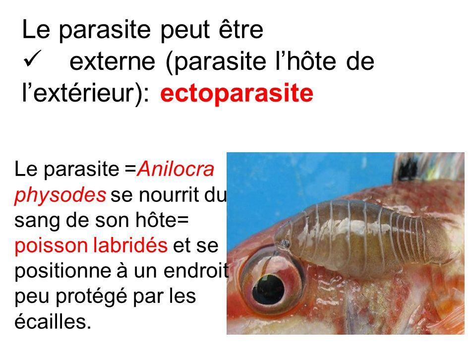 externe (parasite l'hôte de l'extérieur): ectoparasite