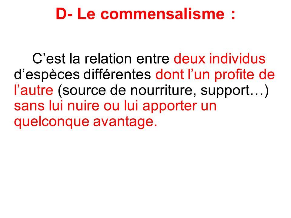 D- Le commensalisme :