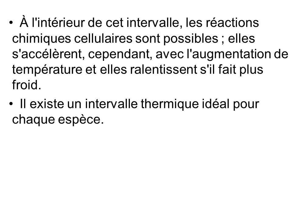À l intérieur de cet intervalle, les réactions chimiques cellulaires sont possibles ; elles s accélèrent, cependant, avec l augmentation de température et elles ralentissent s il fait plus froid.